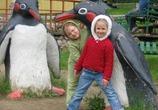 Весенние пингвины