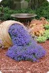 Цветы в нашем саду