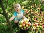 вооот сейчас как потрясу яблоньку!!!!!!!!!!!