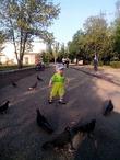 гоняем голубей