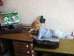 А мне так удобно изучать мышку от компа, принтер оказался очень удобным для учёбы.