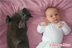 Болезнь кошачьей царапины - что это?