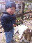 На прогулке в Зоопарке