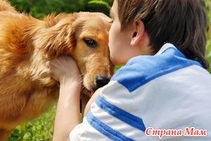 Лечение эхинококка у детей и взрослых