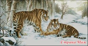 Бенгальские тигры. (Ищу схему)