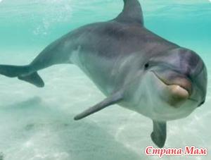 Шоу дельфинов.ZOO 2015 год Дуйсбург...