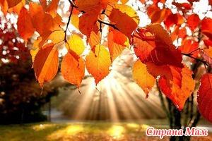 Лунный посевной календарь садовода и огородника на 23 сентября