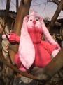 Заяс в розовых тонах2