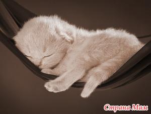 Какая пища полезна перед сном