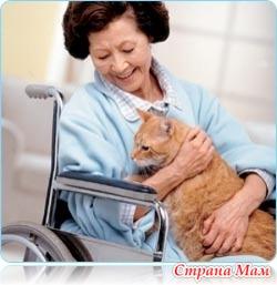 Анималотерапия: кошки - домашние лекари