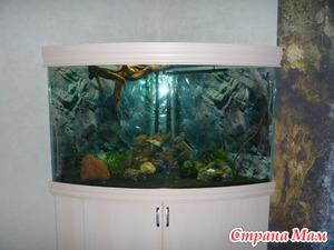 Запуск аквариума.