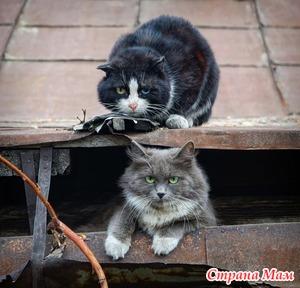 Коты и соседи. Дополнила