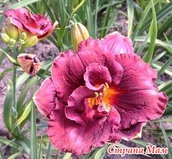 Многолетние цветы и кустарники.