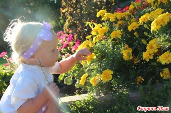 Самый солнечный цветочек!!!