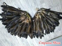 Шкуры баргузинского соболя