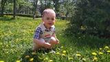 Вырос одуванчик-желтый сарафанчик