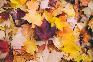 """Конкурс """"Лучший пользователь октября"""" с POLARIS на MyCharm.ru"""