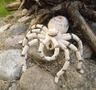 тарантул от Таиса1810