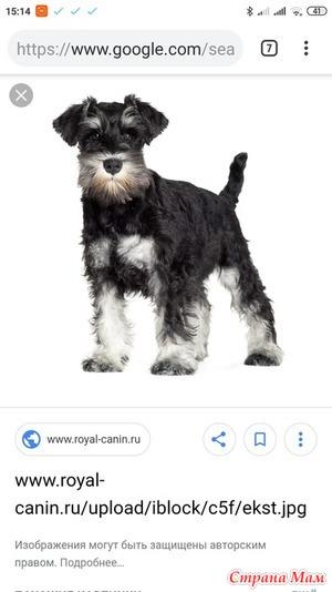 Помогите придумать имя для щенка