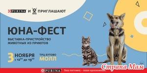 Время новых встреч: в ноябре пройдет выставка-пристройство «Юна-Фест!»