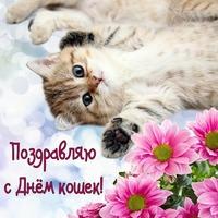 С Всемирным Днем кошек!