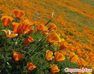 Попробуем вырастить садовые цветы в домашних условиях?..