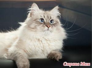 Нужна помощь в выборе сухого корма для кота