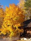 Осень в Поленово